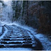 Explore the Forest of Dean this Winter